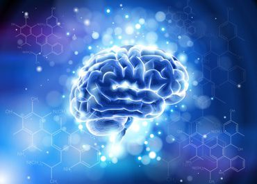 Provasil Reviews: 10 Ingredients to Boost Cognition and Brain Health